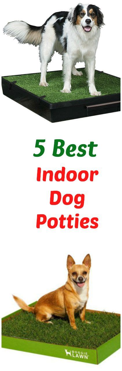 best indoor dogs 25 best ideas about indoor potty on potty backyard and