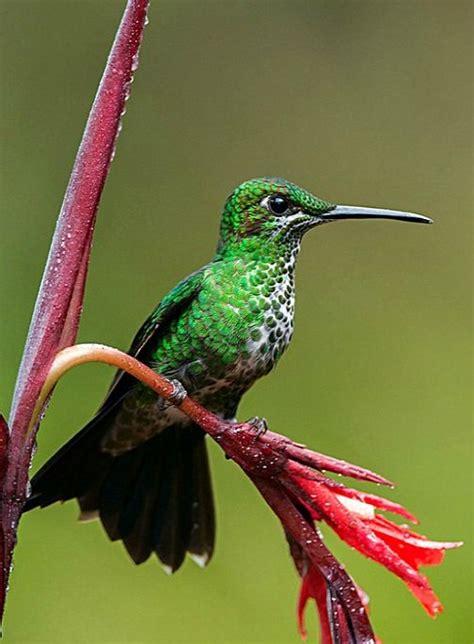 57 fantastiche immagini su hummingbirds su pinterest