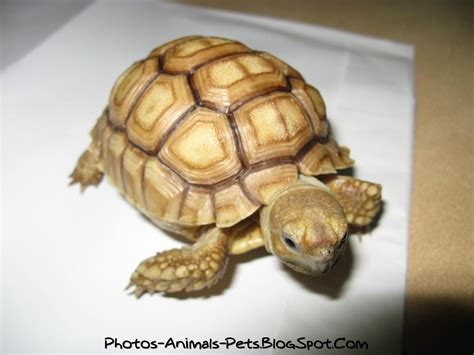 Cute baby turtles pictures