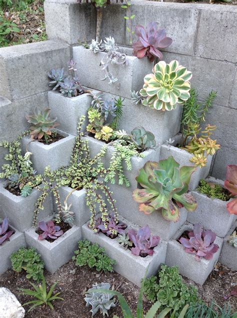 Succulent Gardens Ideas 50 Best Succulent Garden Ideas For 2017