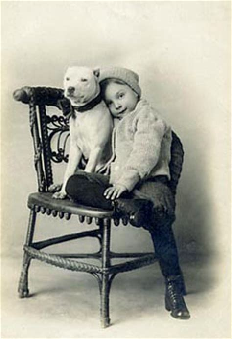 vintage pitbull pictures ultimatebluepitbulls ultimate blues pitbulls ga kim taylor