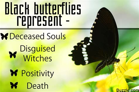 Get To Know The Symbolism And Meaning Of A Black Butterfly Butterfly Meanings