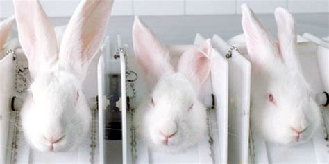 animal test it is time canada banned cosmetic animal testing natacha