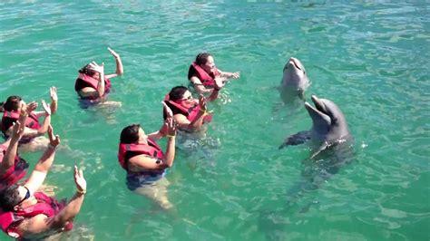 bagno con i delfini in vasca da bagno con i delfini