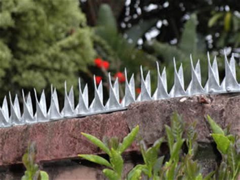 garden wall security deterrent wall spikes protecting your families