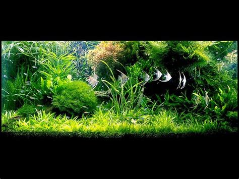 aquascape design australia 686 best images about peceras y acuarios on pinterest