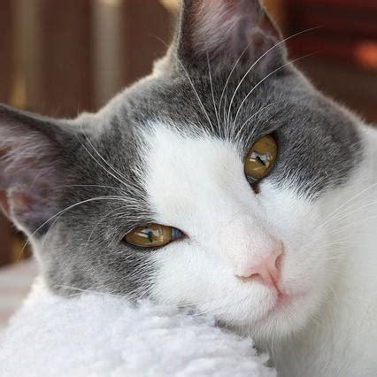 alimentazione e diarrea dieta per gatti con diarrea