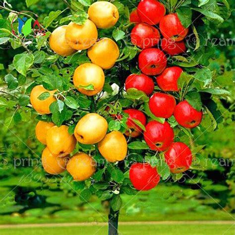 indoor plant seeds online buy wholesale indoor plants from china indoor