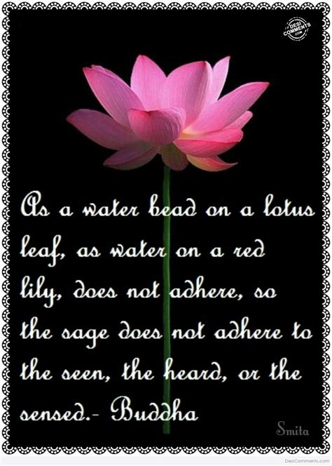poem on lotus flower in flowers pictures images graphics for whatsapp