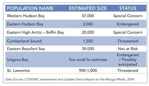 Gestation Table Beluga Facts
