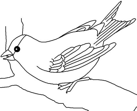 coloring page of florida state bird free coloring pages of indiana state bird
