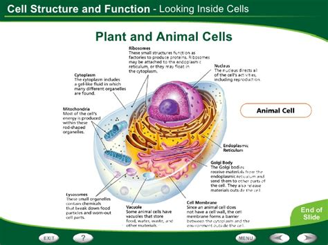 diagram of the and its functions cell structure and function