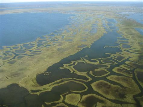 the arctic coastal plain usgs changing arctic ecosystem