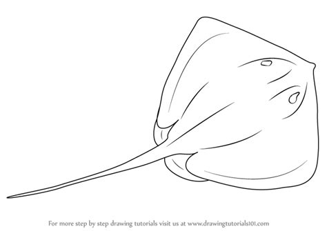 how to draw stingray drawing www pixshark images