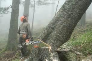 techniques d abattage des arbres la des jardins