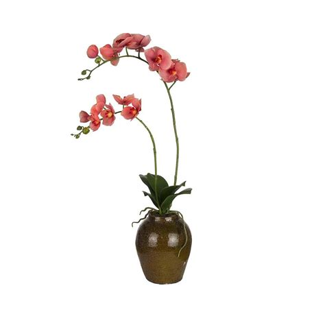 Orchids In A Vase by Buy Sia Coral Phalaenopsis Orchid In Vase Amara