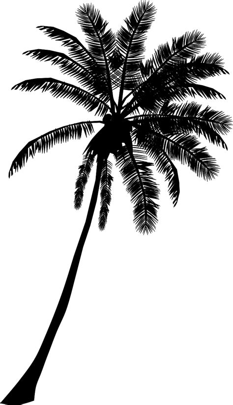 palm tree svg clipart palm trees jaxstorm realverse us