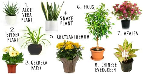plants at home 8 house plants that actually purify the air