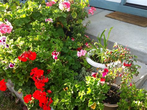 Apartment Plants And Flowers 5 Tips For Landscaping Small Spaces Container Gardens For