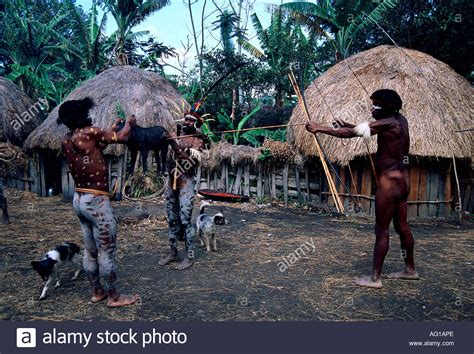 Ethnology And Tourism In Indonesia geography travel indonesia tribe shooting a pig stock photo royalty free