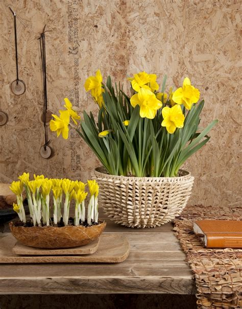 Ideas For Daffodil Varieties Design Decorating Ideas Refresh Your Home With Flowering Bulbs