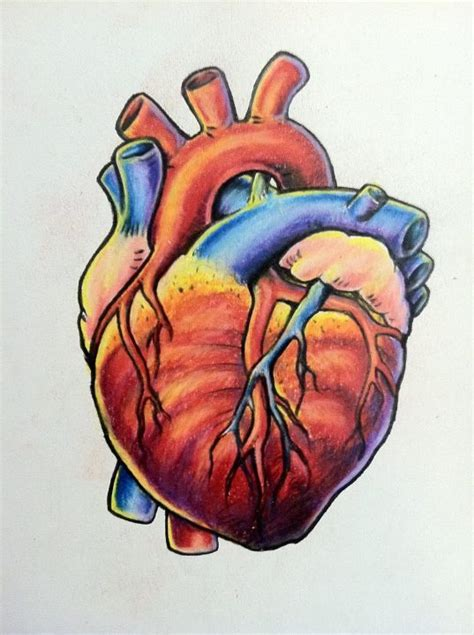 coloured heart tattoo designs 25 best ideas about anatomical drawing on