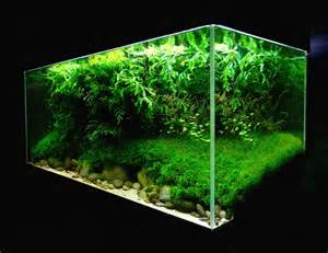 aquascaping world competition gallery erosion by