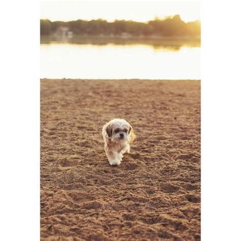 puppy funeral minnesota ace obituary