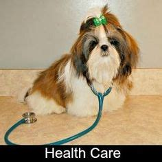 shih tzu health care puppy weight chart mixed breed search pets puppys and