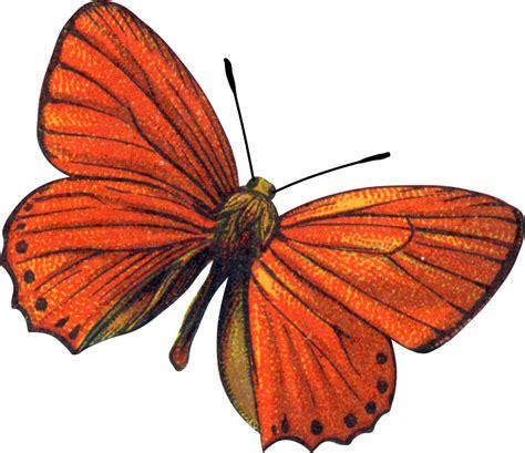 imagenes mariposas rojas marcos gratis para fotos scrap objetos png para hacer