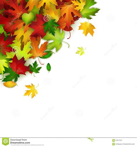 fall card template vector background with colorful autumn leaves card