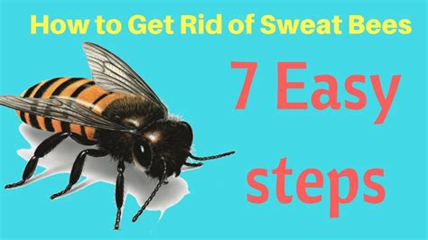 how to get rid of bees in backyard how to get rid of sweat bees in yard without professional help fast easy steps youtube