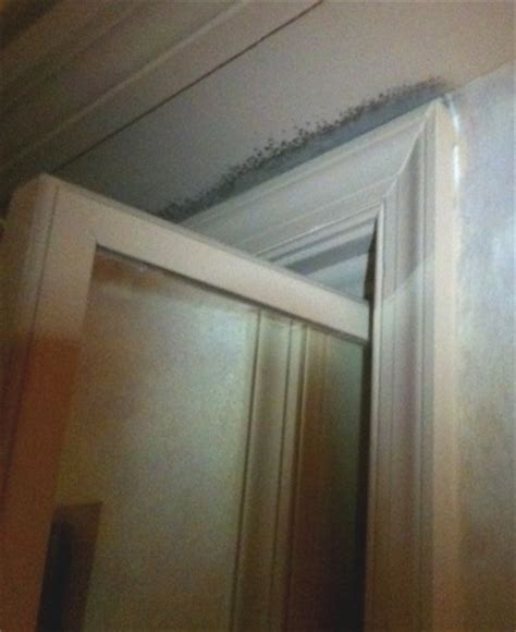 Black Mold In Closet by Black Mold Toxicity Dangers Symptoms Health Concerns