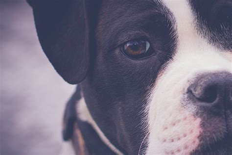 cognitive dysfunction in dogs my experience with canine cognitive dysfunction nation
