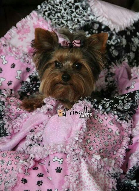 yorkie quilt yorkie scrappy quilts and yorkies on