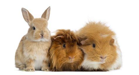 minicuentos de conejos y veterinario conejos en barcelona clinica veterinaria exotics