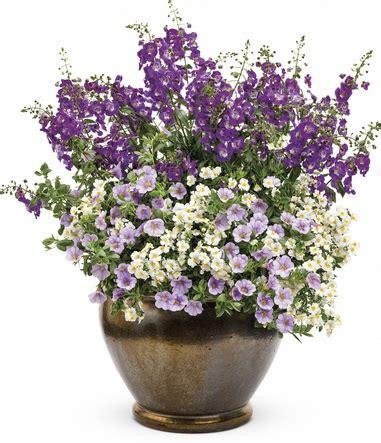 Bibit Rosemary Bandung bunga cantik pengusir nyamuk inilah penjelasan tentang