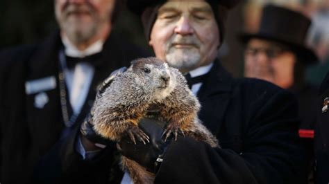 groundhog day phil groundhog day 2018 punxsutawney phil sees his shadow 6