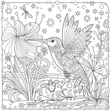 coloring pages for adults hummingbird 8659 best coloring pages doodles zentangles images on