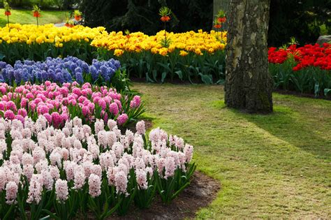 Colorful Flower Garden Free Stock Photo Public Domain Photos Of Flower Garden