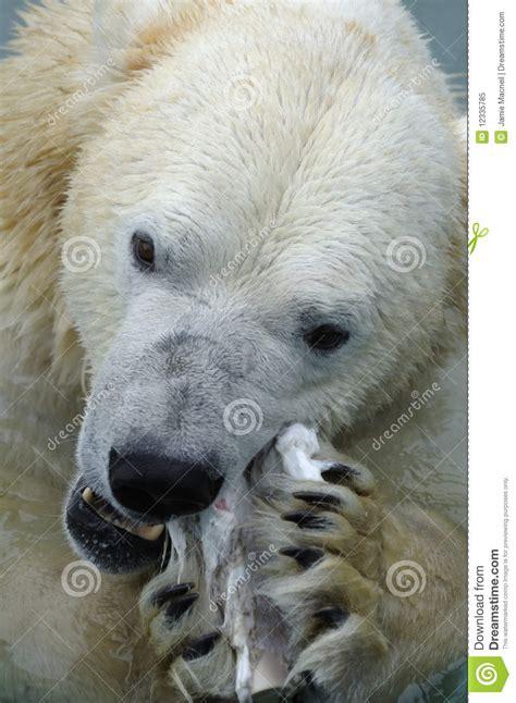 polar royalty free stock photo image 12335785