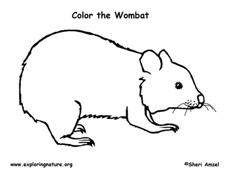 Wombat Coloring Page Wombat Coloring Page
