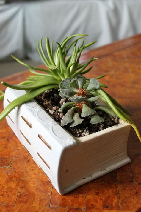 Succulents Planters by How To Turn An Book Into A Planter For Your Succulents