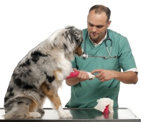 puppy vet how to care for a wounded argos pet insurance