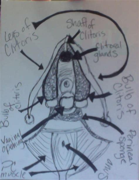 diagram of clitorus the a diagram by heartsobbing on