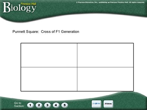 Chapter 11: Introduction to Genetics F1 Generation Punnett Square