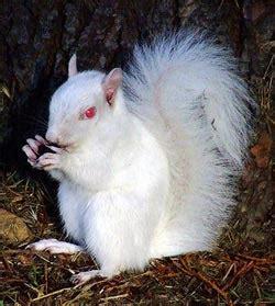 imagenes de animales albinos animales albinos mascotas
