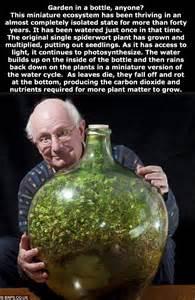 garten in der flasche mini biosph 228 re garten in der flasche dennis