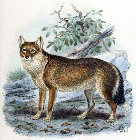 Of The Island Fox A Mystery three hundred year mystery of the falkland islands