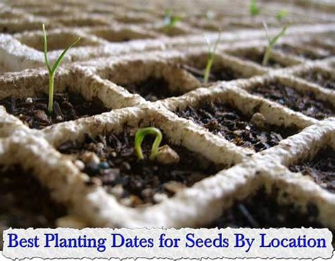 vegetable garden planting dates best planting dates for seeds by location